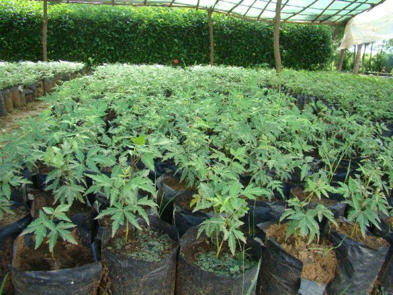 Neem plant -Indoor herb garden